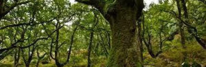 Ingeniería y Gestión Agroforestal